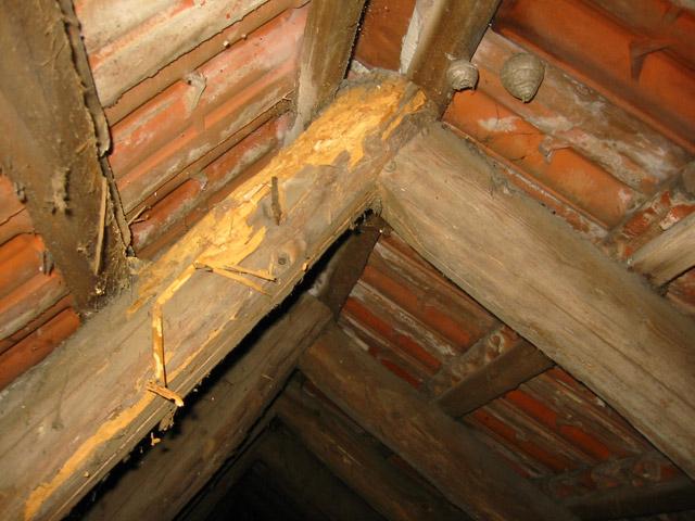 Holzschadlinge In Brilon Dr Dicht Gmbh