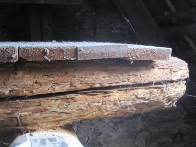 Bekampfender Holzschutz Dr Dicht Gmbh
